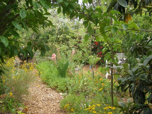 Food Forest Backyard : Food Forest Planting  Workparty  Saturday May 17th  The Table